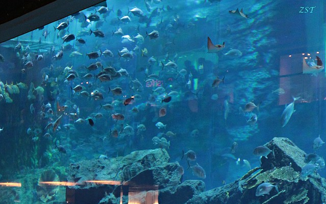 Dubai Mall Aquarium Photo Gallery
